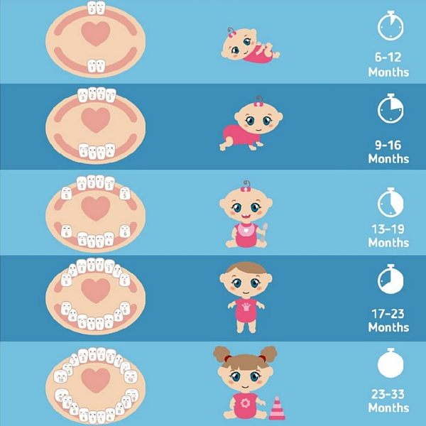 teething chart for babies